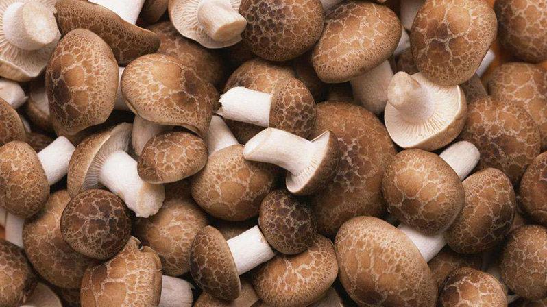 香菇生产线