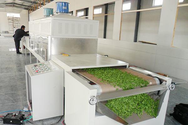微波干燥杀青设备在茶叶杀青、干燥的可行性