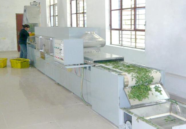 微波杀青干燥设备在茶叶厂的应用|茶叶用微波烘干设备杀青效果佳